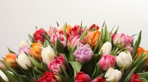 Gėlių dėžutės ❤️
