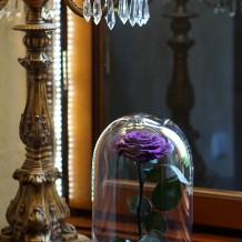 Mieganti rožė po stiklu - purpurinė