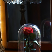 Mieganti rožė po stiklu - raudona