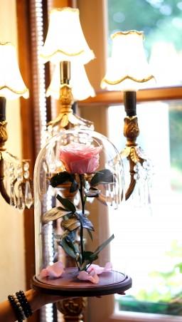 Mieganti rožė po stiklu - rožinė