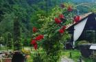 Vestuvės viskas įskaičiuota - Batumis (vyninė)